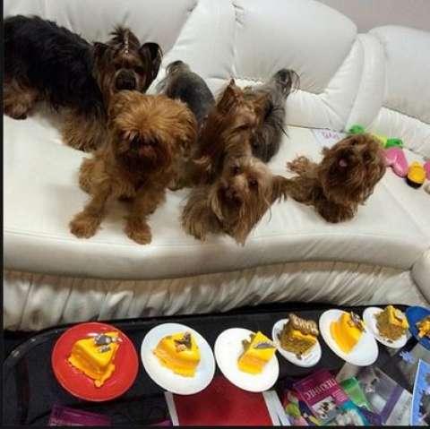 Певец Сергей Лазарев открыл кондитерскую для собак и кошек
