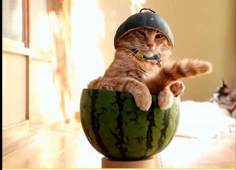 Ученые доказали: кошки – это жидкость!