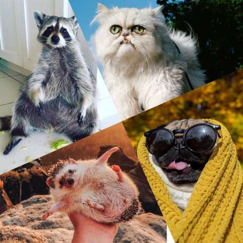 Самые популярные животные в Instagram